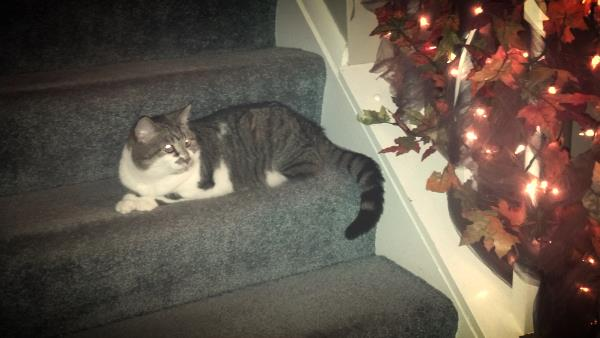 """The text I got from Charlie to go with this photo: """"Trick-or-Tabby is minding the front door."""""""